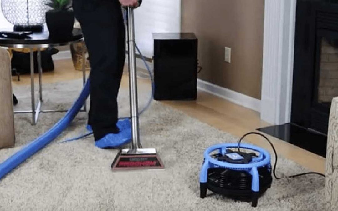Now is the time to get your carpets and furniture sanitized
